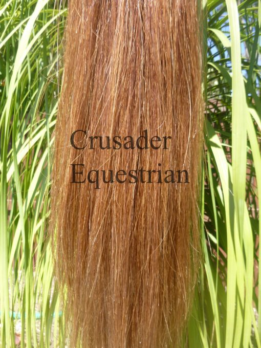 Light chestnut tail