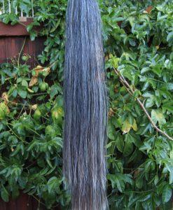 T11 Dark Grey Blunt