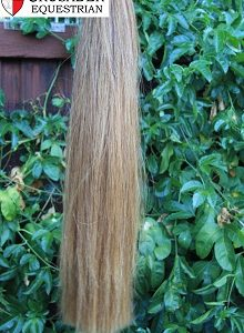 Chestnut Cream Blunt tail