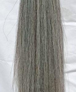 Medium Grey tail